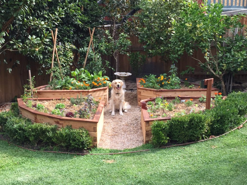 Completed ModBOX wicking bed in Melbourne Garden