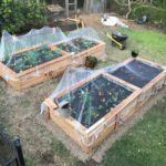 Wicking Garden beds in Corinda