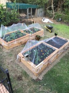 Wicking Garden beds in Corinda